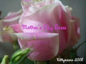 Mother\'s Day Rose