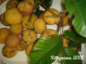 Santol fruits from my tree