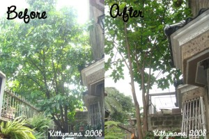 Santol Tree- Before and After